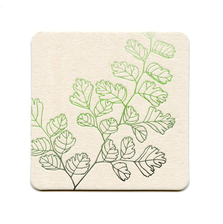 Maidenhair Coaster Set of 8