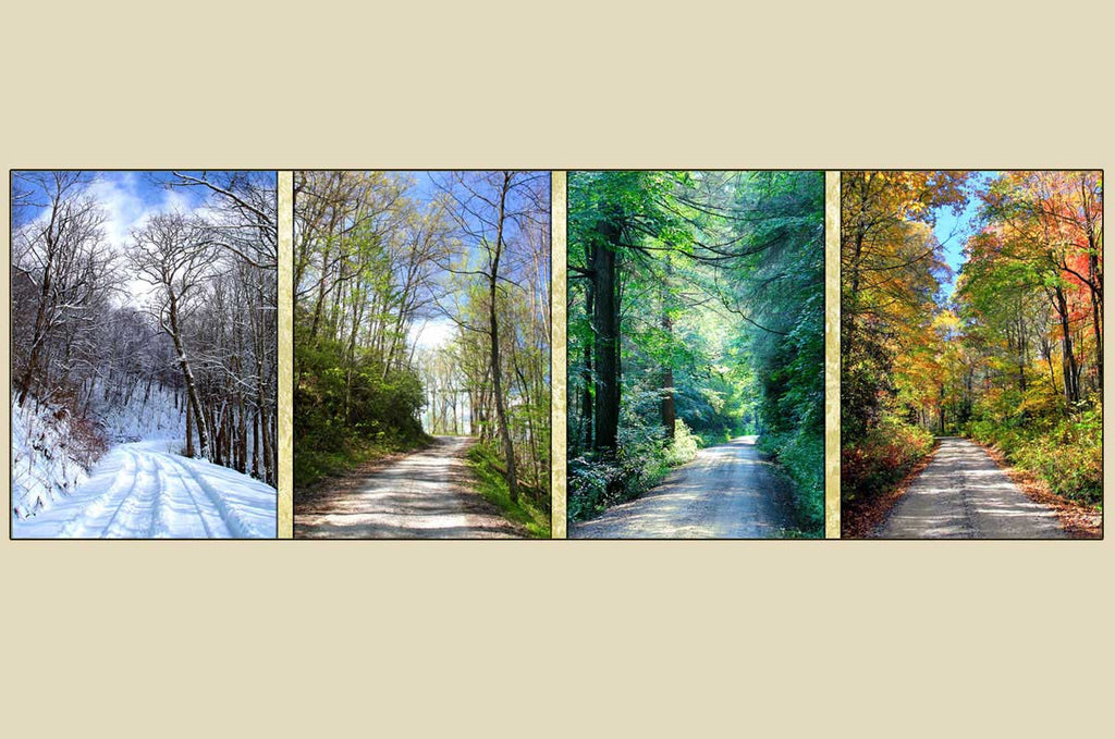 """FOUR SEASONS COUNTRY ROADS"" Photography on Canvas"