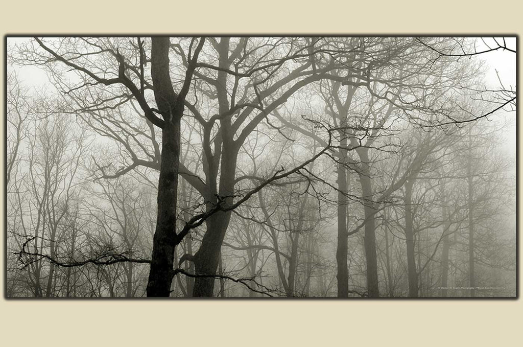 """December Fog"" Wayah Bald - Photography on Canvas"