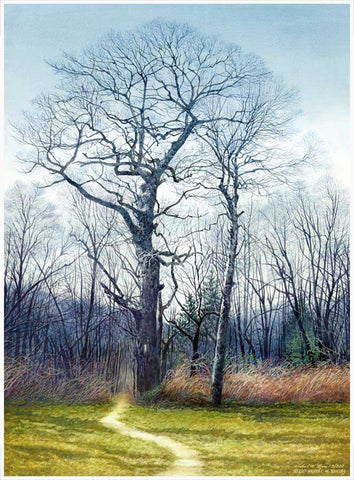 Siler Bald Trees Canvas Print