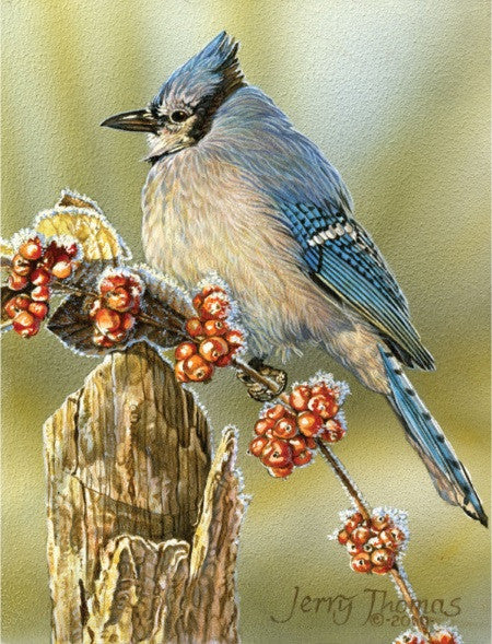 """Frosty Morning Bluejay"" by Jerry Thomas"