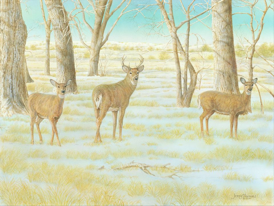 """Cottonwood Grove Whitetails"" by Jerry Thomas"