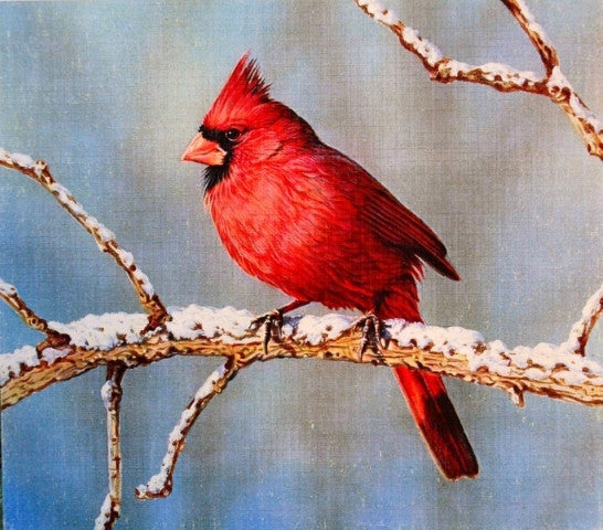 """Winter Cardinal"" by Jerry Thomas"
