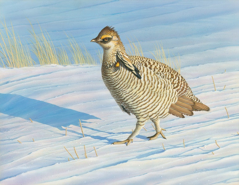 """Winter Walk Prairie Chicken"""