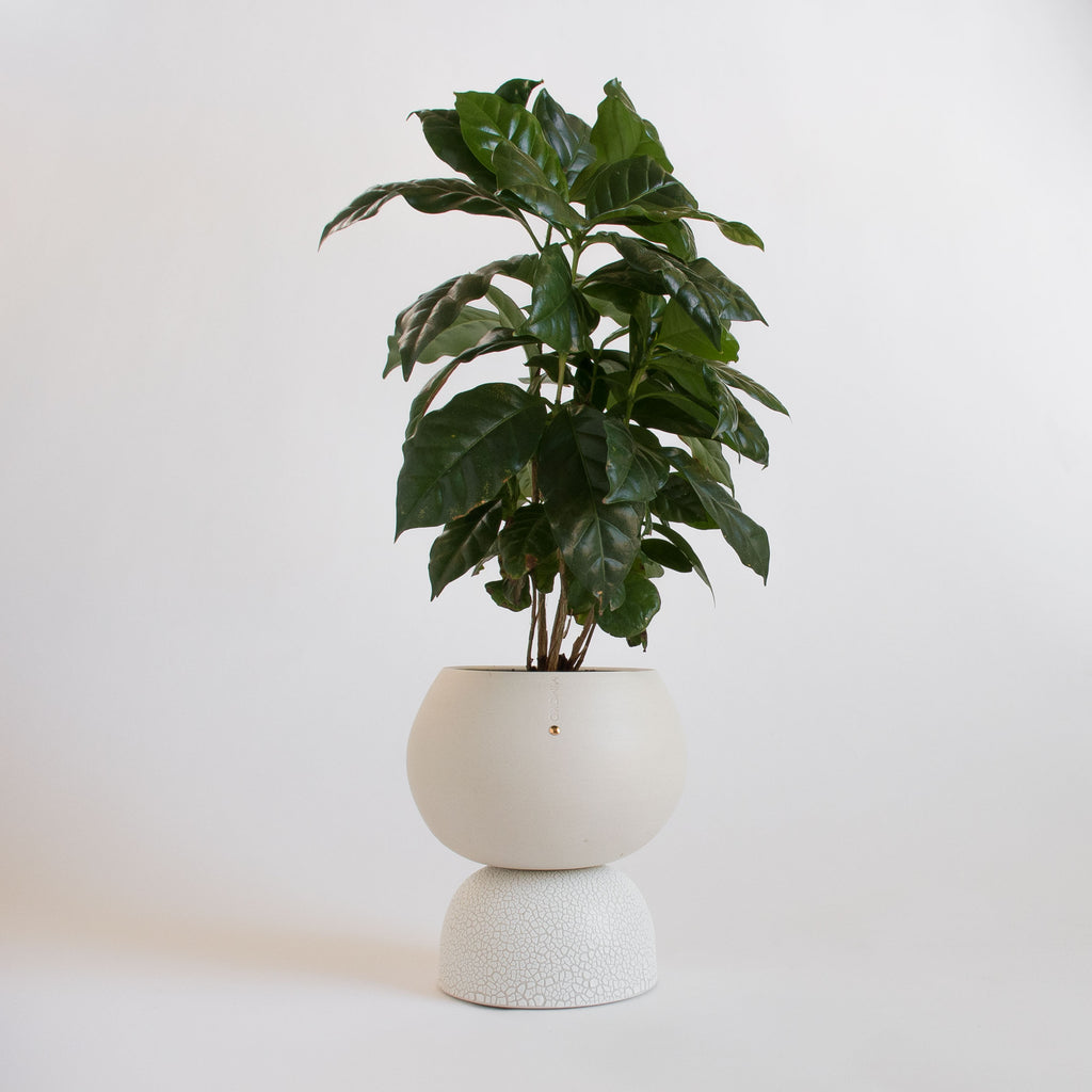 Ellipse Self-Watering Planter
