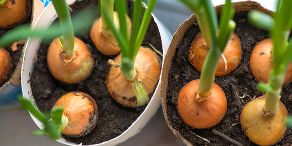 10 Smart Tips for Successful Indoor Gardening