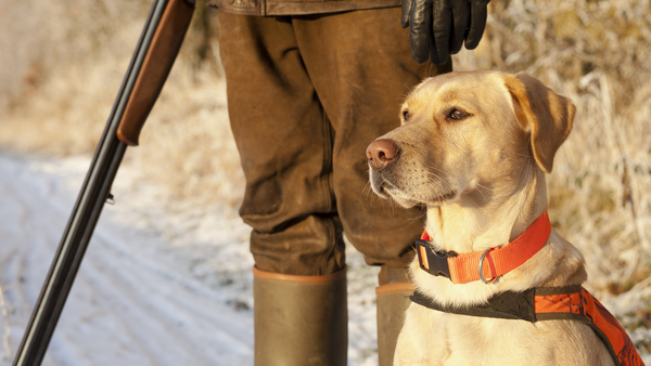 What Dogs Make the Best Hunting Partner?