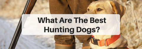 what are the best hunting dogs