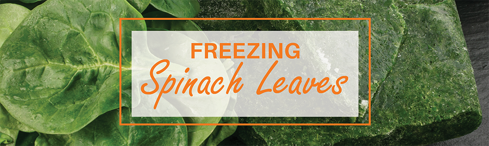 Freezing Spinach Leaves