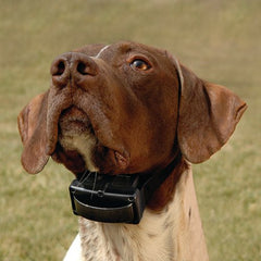 Shock Collar Dog Training Collar Proper Placement