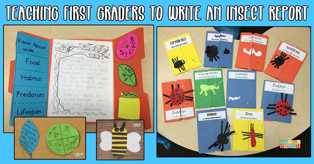 Teaching First Graders to Write an Insect Report!