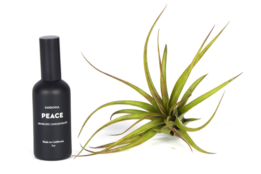 Peace Aromatic Concetrate