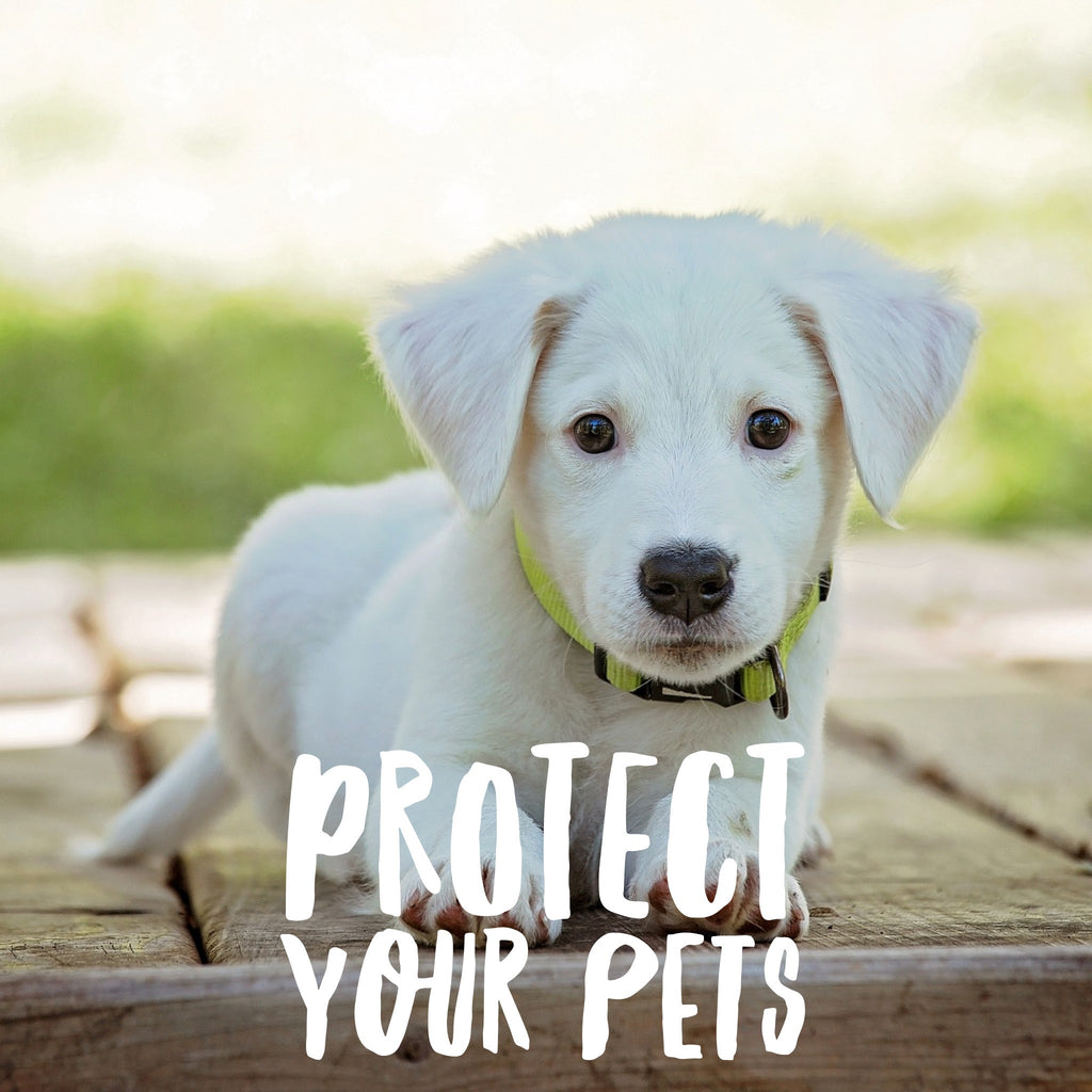 Bathroom cleaning products that are dangerous for pets