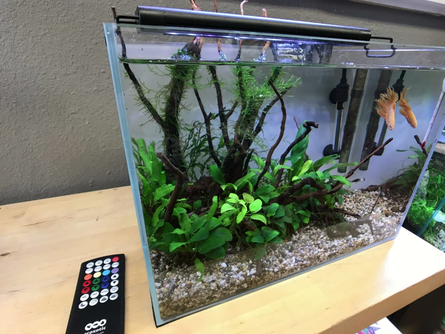 Episode 1: Setting Up Your First Aquarium | So Easy a Kid Can Do It!
