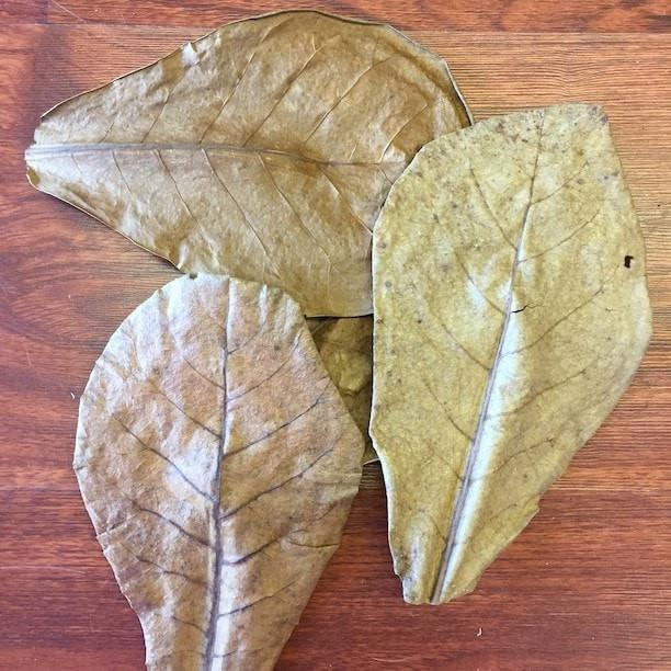 Almond Leaves - ALA
