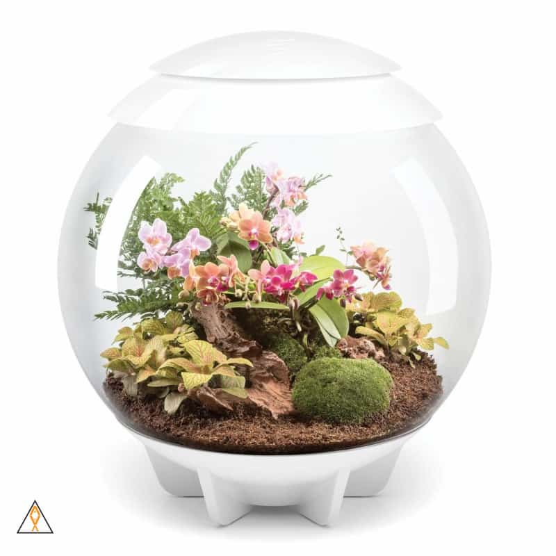 White biOrbAIR LED Terrarium - Oase