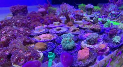 Updates to our San Jose store and a new promotion for coral frags
