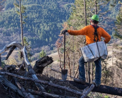 Thanks to your support, California now has over 1000 more trees!