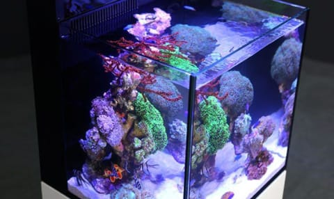MAX NANO Reef Aquarium System (20 GAL) - Red Sea