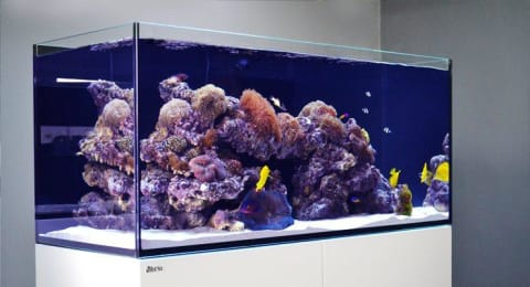 a screen shot of an aquarium