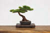 The Bonsai Plastic Model Kit 2 Action Figure