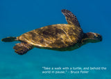 The World of Sea Turtles- Photo Gallery Book