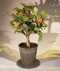 "Artificial Pomegranate Bonsai Tree in Charcoal Grey Round Pot 8"" x 13"" Tall"