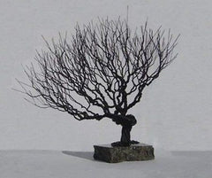 Bonsai Tree Wire Art Metal Sculpture Black Steel Naturally Styled Contemporary