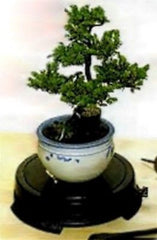 "Bonsai Turntable Indoor / Outdoor - Black ABS plastic 7 1/4""Top 8"" Base 1.625""H"