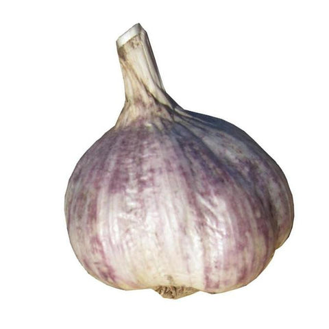 Turban Garlic