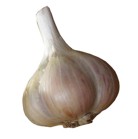 Porcelain Garlic