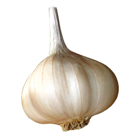 Artichoke (Softneck) Garlic