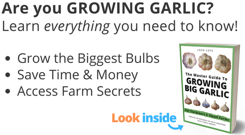 How to Grow Big Garlic