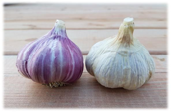Garlic Varieties