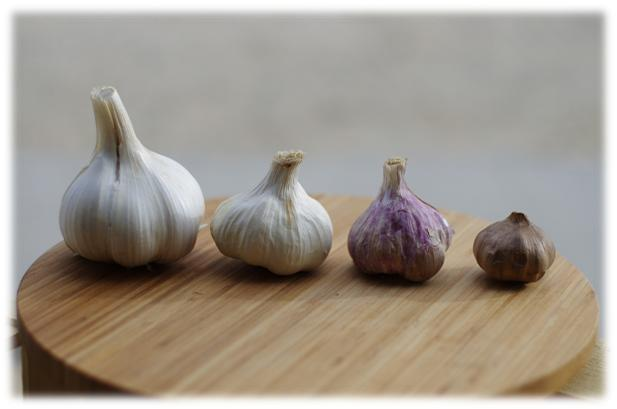 Bulbs of different garlic varieties placed beside each other