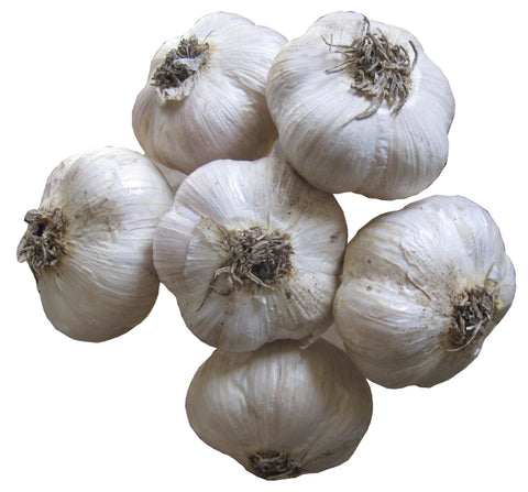 bundle of music garlic bulbs