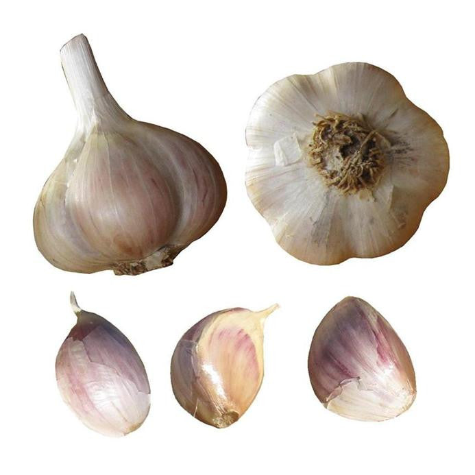 Music garlic seed bulbs