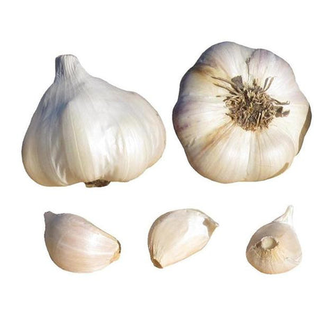 Island star garlic seed bulbs