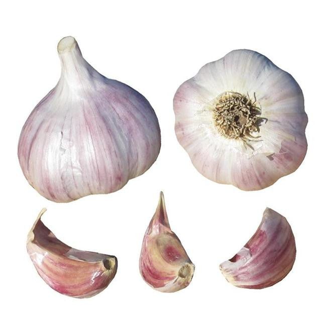 persian star garlic seed