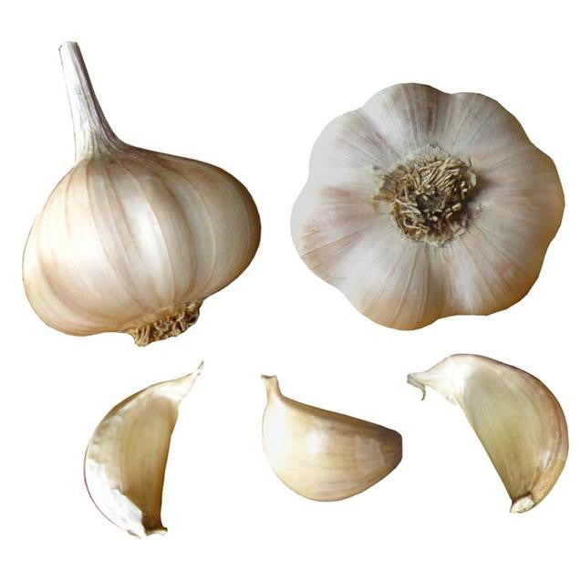 Sicilian Gold Garlic Seed Bulbs