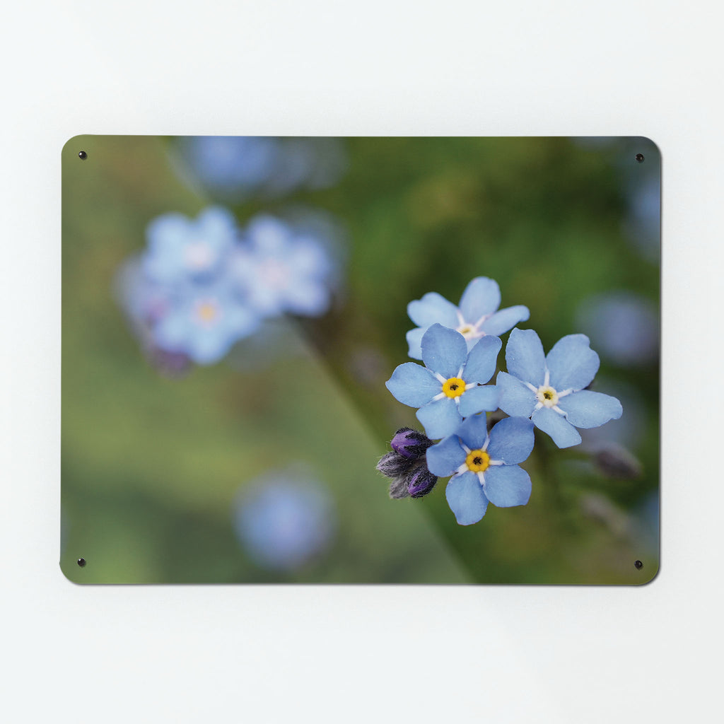 Forget Me Not Magnetic Notice Board
