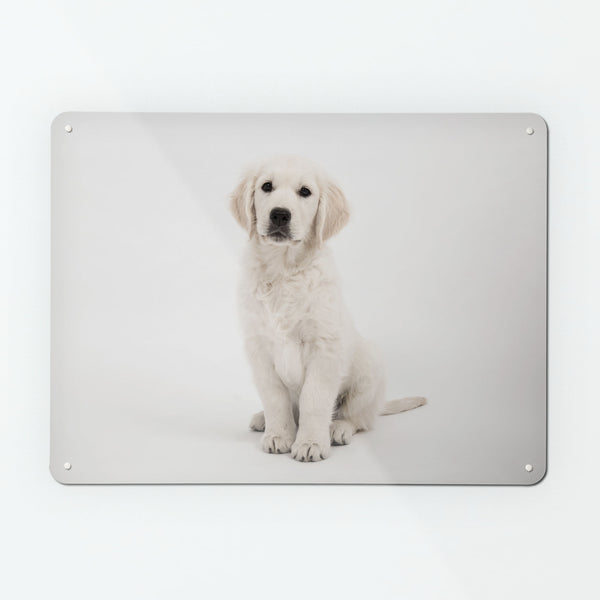 Golden Retriever Puppy Magnetic Notice Board