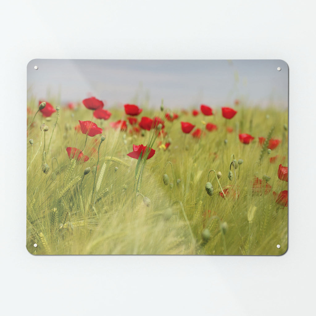 Poppy Field Magnetic Notice Board