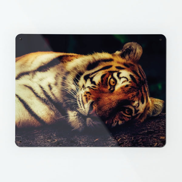 Tiger Magnetic Notice Board