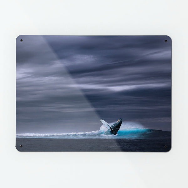 Whale Magnetic Notice Board