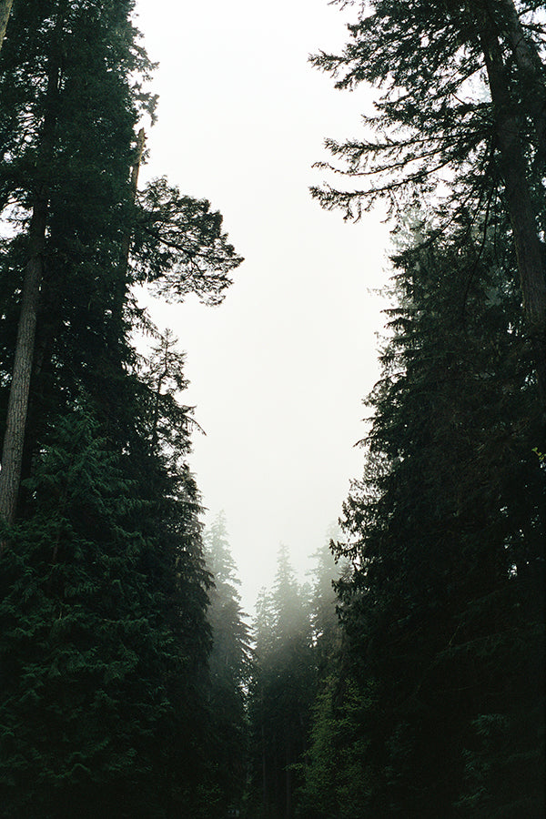 Forest, shot by Maranda on his Pentax