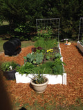 "4x4x11"" Raised Garden Bed"