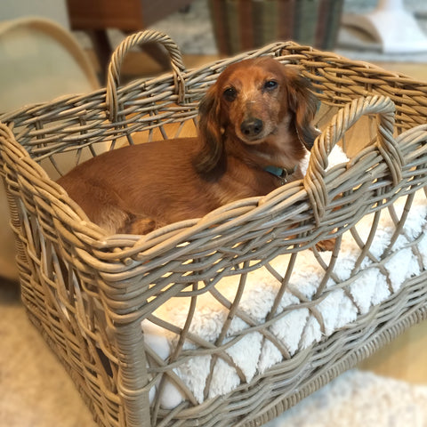 Wicker Tote Basket as dog pet bed