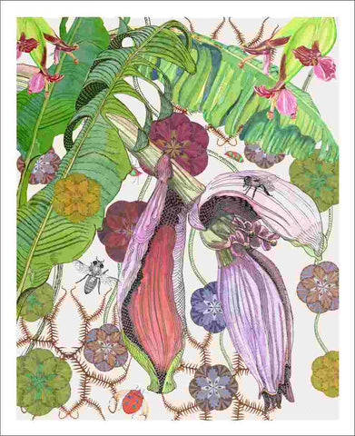 banana flower art print by Judith M Boyes