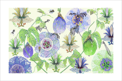 passionfruit summer art print by Judith M Boyes
